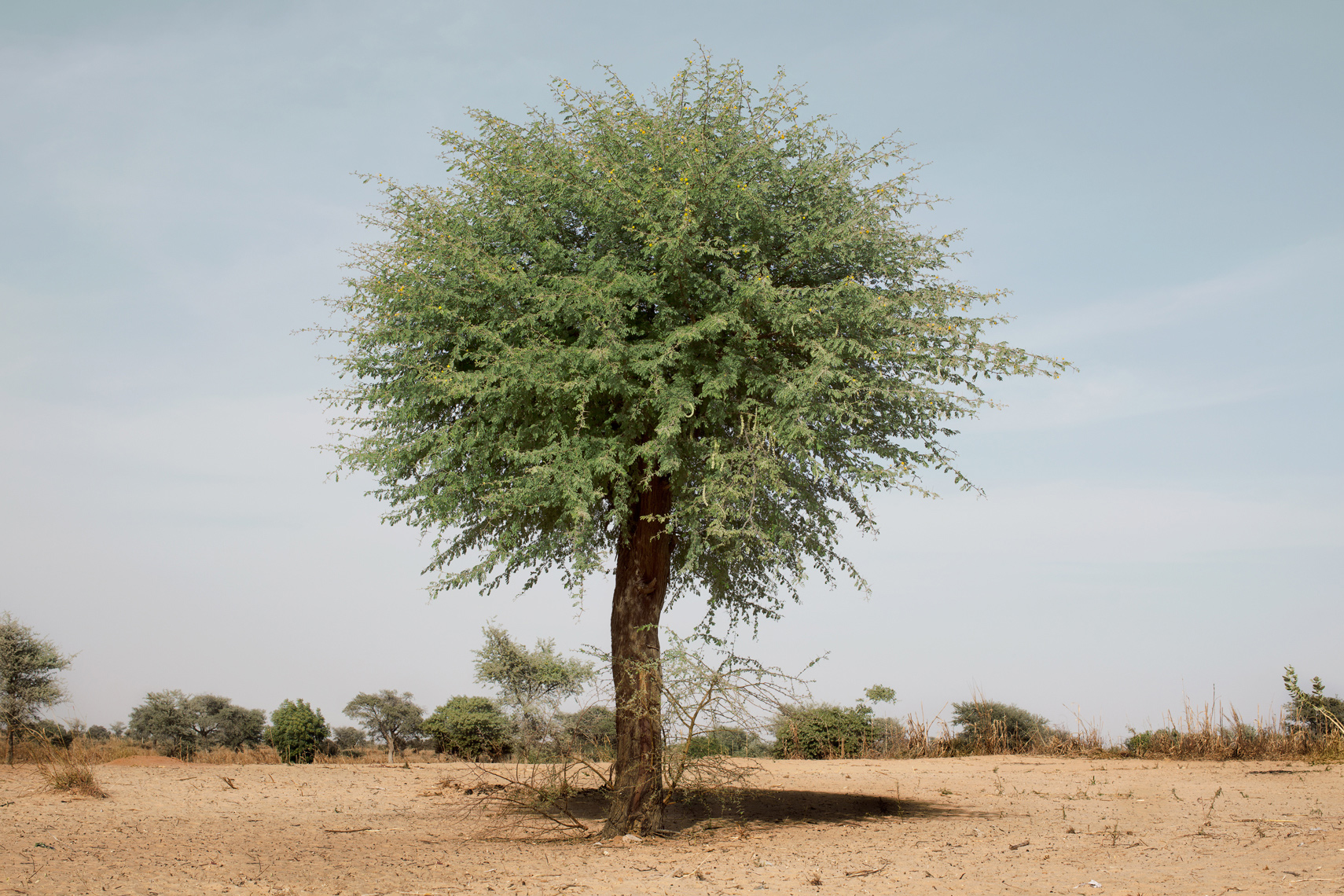 ChrisSisarich_Tree_Mali